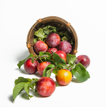 plums a scattered from a basket on white background Stock Photo