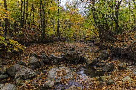 River among heart of the autumn forest Stock Photo