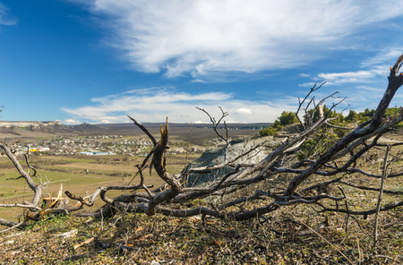 branches of dead tree on sky background in spring Stock Photo