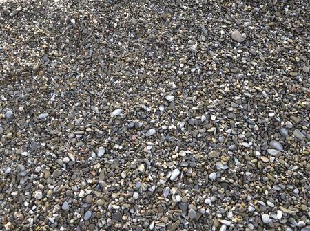 sea pebble with seashell on beach