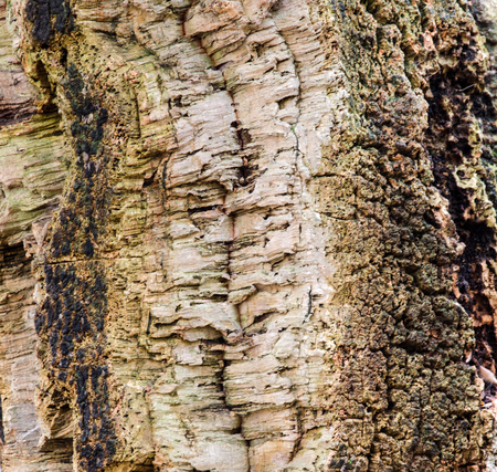 view of a piece of an old weathered corkwood tree bark