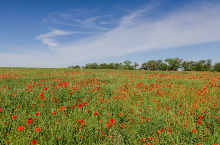 Countryside with poppy field at morning Stockfoto