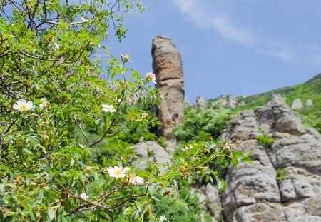 flowering rosehip and columns in mountains against sky Reklamní fotografie