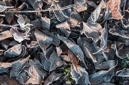 heap of autumnal fall leaf against ground