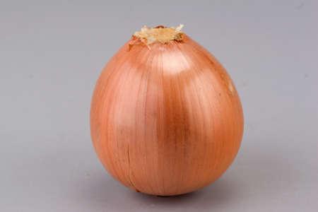 alliaceae: onion