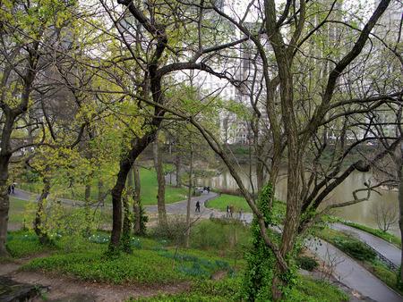 ニューヨークのセントラル ・ パークの木