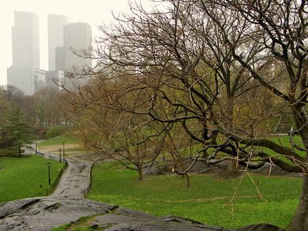 ニューヨークのセントラル ・ パークの木や高層ビル