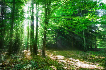 forest Stock Photo - 13906104