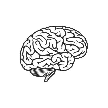Vector outline illustration of human brain. Stock vector illustration isolated on white background  イラスト・ベクター素材
