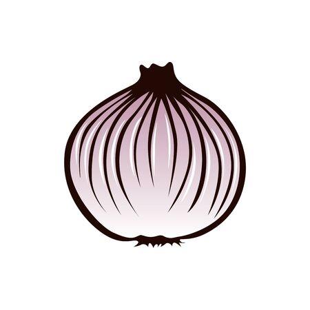 Onion illustration vector