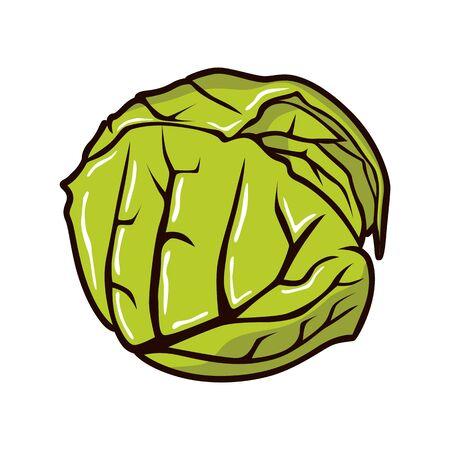 Cabbage illustration vetor Çizim