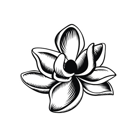 Magnolia illustration vector Illustration