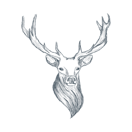 Head of deer illustration sketch hand drawn vector Ilustração