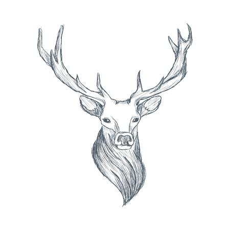 Head of deer illustration sketch hand drawn vector Stock Illustratie