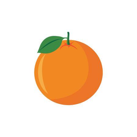 Orange fruit vector illustration isolated on white background