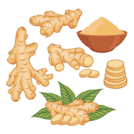 Ginger vector set illustration