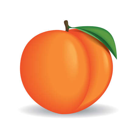 Realistic whole peach vector illustration