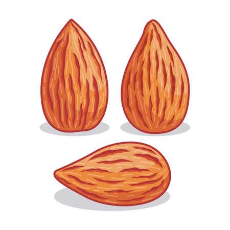 Realistic almond illustration with different shape Иллюстрация