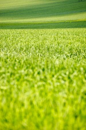 saarland: Green field in Saarland, Germny Stock Photo