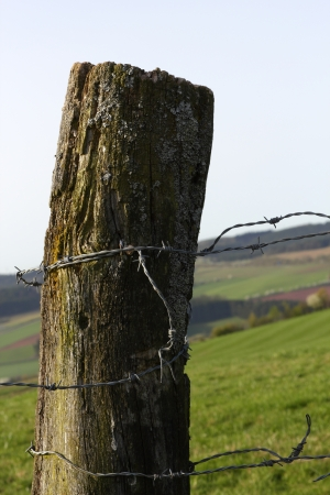 fencepost: Hedge fencepost with barbed wire