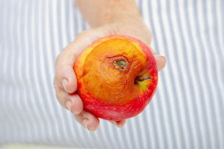 female hand holding rotten apple photo