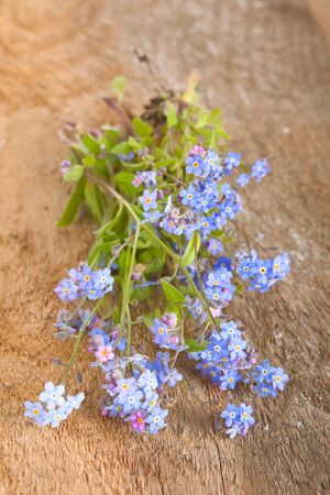 forget: Blue forget me not flowers Stock Photo