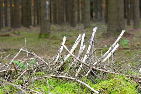 moos: Forest ground with moos and dry wood Stock Photo