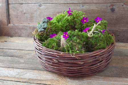 Decorative Moss Balls Interesting Decorative Moss Balls In A Basket Stock Photo Picture And Royalty