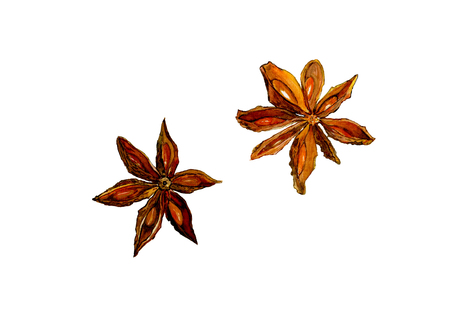 Whole chinese star anise (illicium) spice and seeds, two objects isolated, watercolor illustration on white Banco de Imagens