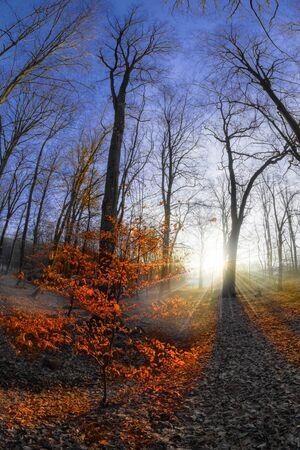 A forest landscape in the state of Brandenburg (Germany) Stok Fotoğraf
