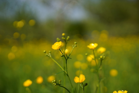 필드, 배경에 미나리 꽃