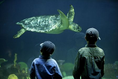 two young boys watching a turtle in an aquarium
