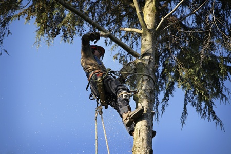 chainsaw: An arborist cutting a tree with a chainsaw