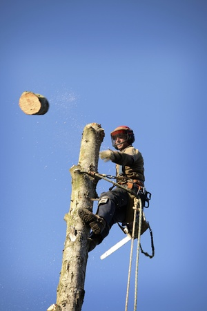 wood cutter: An arborist cutting a tree with a chainsaw