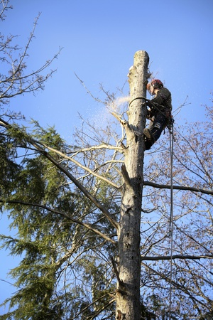 harness: An arborist cutting a tree with a chainsaw