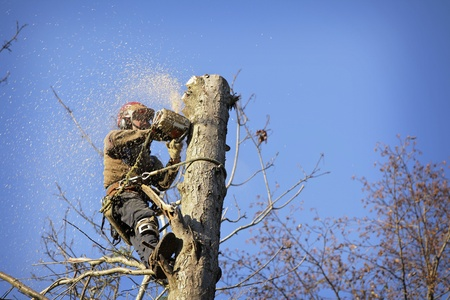 forestry industry: An arborist cutting a tree with a chainsaw