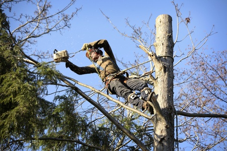 power saw: An arborist cutting a tree with a chainsaw