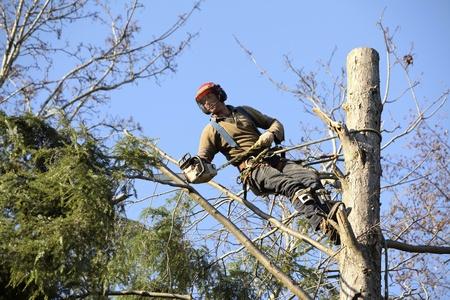 leñador: Un arbolista cortar un árbol con una motosierra