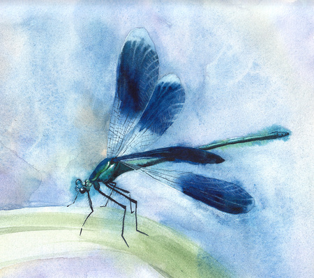 Hand drawn watercolor illustration of blue dragonfly. 写真素材