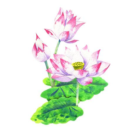 small pink blossom of lotus watercolor drawing Foto de archivo - 116079153