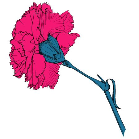 Hand drawing pink Carnation flowers with dark steam. Isolated Line art with white background.