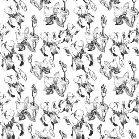 Floral seamless pattern with hand drawn ink iris and orchid flowers on white background. Flowers lined up in harmonious uninhibited sequence Фото со стока