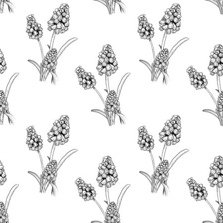 Seamless pattern with realistically painted ink Muscari flowers. Hand drawn illustration on white background modified to digital source for modern disign, print textile, fabric, wrapping paper