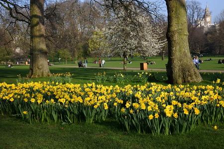 Narcissen in de lente, openlucht en park, het UK Stockfoto