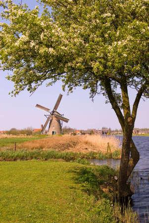 Windmill in Kinderdijk photo