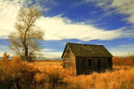 Skyline view of 1oo year old cabin fading into winter weeds, golden gras and barren tree limbs photo