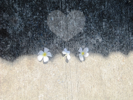 background textures: Flowers background,Heart & shadow on sidewalk