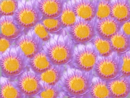bloemen achtergronden, lotus