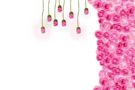 Flower backgrounds, roses for lamps, creative