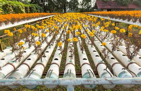 水耕栽培農場は成長する植物の水土壌なしで、鉱物の栄養ソリューションを使用する方法です。